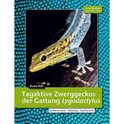 Tagaktive Zweggeckos der Gattung Lygodactylus als Buch von Beate Röll
