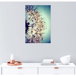 Posterlounge Wandbild, Pusteblume blauer Kristall 100 cm x 150 cm