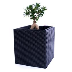 Pflanzkübel Polyrattan quadratisch 30x30x30cm schwarz.