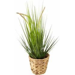 Kunstpflanze Gras Fuchsschwanzgras, I.GE.A., Höhe 52 cm