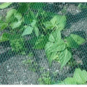 Vogelschutznetz Laubschutznetz Gartennetz 2 x 10m