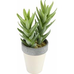 Kunstpflanze Succulente in Topf 25/11 cm Succulente, I.GE.A., Höhe 25 cm