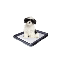 Nobby Doggy Trainer Pads, S 24 Stück