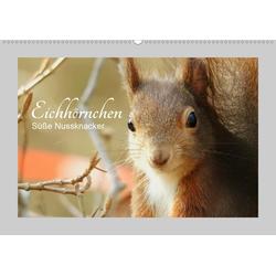 Eichhörnchen - Süße Nussknacker (Wandkalender 2021 DIN A2 quer)