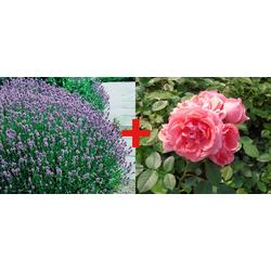 BCM Beetpflanze Rose Kimono & Lavendel Set