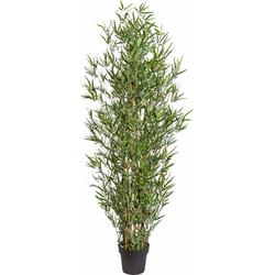 Kunstpflanze, Kunstpflanzen, 788593-0 grün H: 150 cm grün