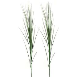 Ziergras, 70 cm, 2 Stück