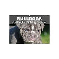 Bulldogs - Old English Bulldog Puppies (Wall Calendar 2021 DIN A3 Landscape)