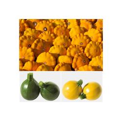 Volmary Gemüsepflanze Zucchini Set, 3 Sorten im Mix