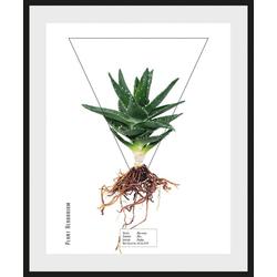 queence Bild Aloe vera, (1 Stück) 50 cm x 60 cm