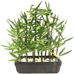 Kunstpflanze Bambus, I.GE.A., Höhe 45 cm, Mit Natursteinen