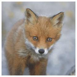 Linoows Papierserviette 20 Servietten, Fuchs, junger Rotfuchs, Tiermotiv, Motiv Fuchs, junger Rotfuchs im Herbst