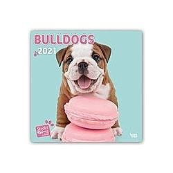 Bulldogs - Bulldoggen 2021