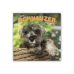 Schnauzer Puppies - Schnauzer Welpen 2021 - 16-Monatskalender mit freier DogDays-App
