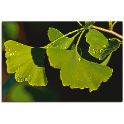 Artland Wandbild Ginkgo Blätter, Blätter (1 Stück) 30 cm x 20 cm