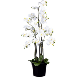 Kunstorchidee Phalaenopsis Orchidee Phalaenopsis, Creativ green, Höhe 130 cm weiß