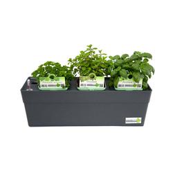 Greenbar »Küchenkräuter« - Tchibo - Grau