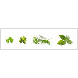 Küchenrückwand - Spritzschutz profix, Kräuter, 220x60 cm grün