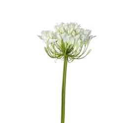 Kunstblume Agapanthus(H 91 cm)