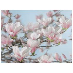 KOMAR Fototapete Magnolia bunt