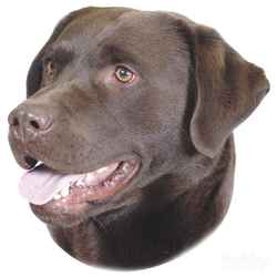 Nobby Aufkleber Labrador braun