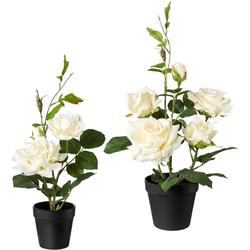 Creativ green Künstliche Zimmerpflanze, 2er Set weiß Zimmerpflanze Zimmerpflanzen Kunstpflanzen Wohnaccessoires