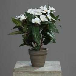 Kunstpflanze Immergrün creme