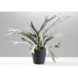 Kunstpflanze GEWEIHFARN(H 48 cm) Casa Nova