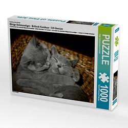 Bärige Schmusetiger - Britisch Kurzhaar / CH-Version Lege-Größe 64 x 48 cm Foto-Puzzle Bild von izp-design Puzzle