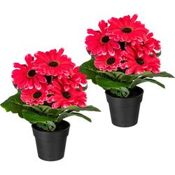 Künstliche Zimmerpflanze Elaine Gerbera, my home, Höhe 27 cm, 2er Set rosa