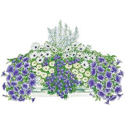 BCM Balkonpflanze Blau-Weißer Traum Set, 16 Pflanzen