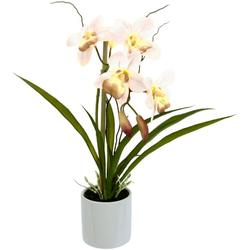 Kunstorchidee Orchidee, I.GE.A., Höhe 33 cm, im Keramiktopf natur