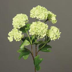 Schneeball grün(H 60 cm)