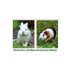 Kaninchen und Meerschweinchen Babys (Tischkalender 2021 DIN A5 quer)