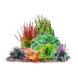 BCM Beetpflanze Japan-Staudenbeet Set, 7 Pflanzen