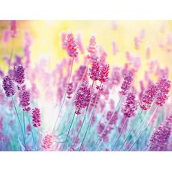 Fototapete Lavender Flower, glatt 2,50 m x 1,86 m