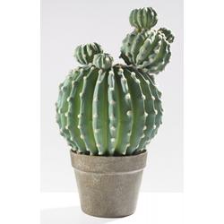 Kunstpflanze Kaktus(H 48 cm) Casa Nova
