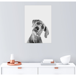 Posterlounge Wandbild, Fragender Blick 100 cm x 130 cm