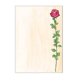 SIGEL Motivpapier Rose Bloom Motiv DIN A4 90 g/qm 25 Blatt
