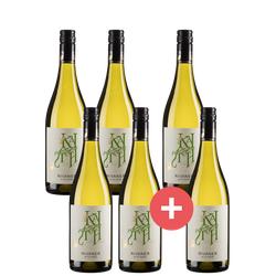 4+2 Paket Spargelwein Rivaner Alte Rebe - Weinpakete