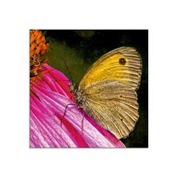 Artland Glasbild Großes Ochsenauge, Insekten (1 Stück) 50 cm x 50 cm x 1,1 cm