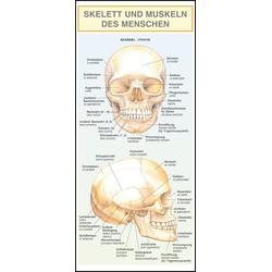 Skelett und Muskeln des Menschen. als Buch von Barbora Dancová/ Barbora Dan'ová