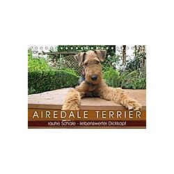 Airedale Terrier (Tischkalender 2021 DIN A5 quer)