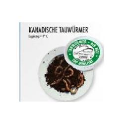 Kanadische Tauwürmer Tauwürmer lebende Angelköder Inhalt 10 Stck