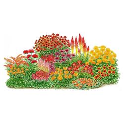 BCM Beetpflanze Sonnenfeuer Set, 14 Pflanzen