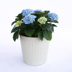 Blumenkübel rund konisch Polyrattan 26x26x24cm creme weiß.