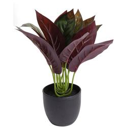 Künstliche Zimmerpflanze Calathea Calathea, Botanic-Haus, Höhe 20 cm