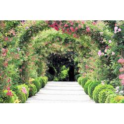 Fototapete »Rose Arch Garden«, Tapeten, 765815-0 grün (B/H): 350/260 cm grün