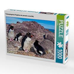 Felsenpinguine (Pingüinos de penacho amarrillo) Lege-Größe 64 x 48 cm Foto-Puzzle Bild von Bernd Zillich Puzzle