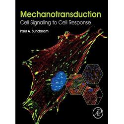 Mechanotransduction: eBook von Paul A. Sundaram